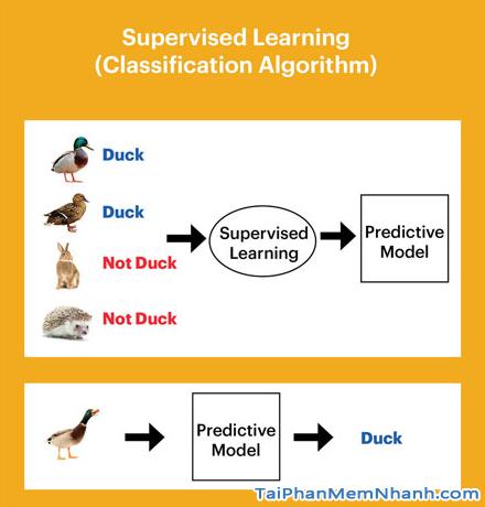 Machine Learning là gì? Machine Learning hoạt động như thế nào? + Hình 5